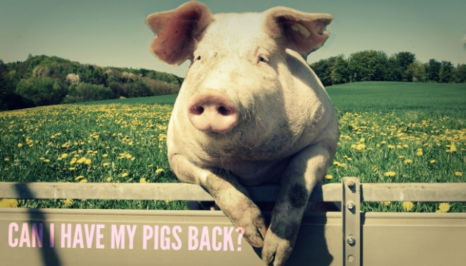 can-i-have-my-pigs
